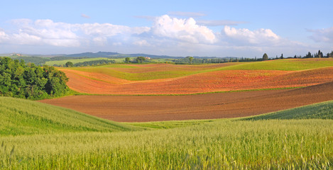 spring fields in the crete senesi, tuscany, italy
