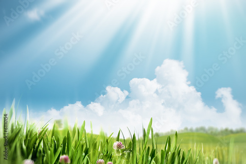 Summer meadow, seasonal natural backgrounds for your design