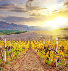 Vineyard in Crimea, mountain in Crimea