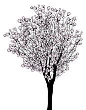 magnolia arbre de fleurs isolé sur fond blanc