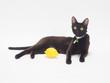 黒猫とレモン