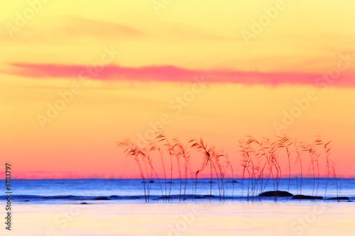 Leinwandbild Motiv Tropical sunset, abstract landscape with canes.
