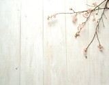 Cherry blossoms on white wooden background