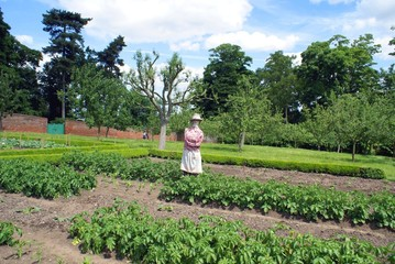 scarecrow in kitchen garden
