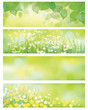 Vector  spring nature banners, birch  tree leaves,  dandelion an