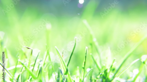 grass background with water drops
