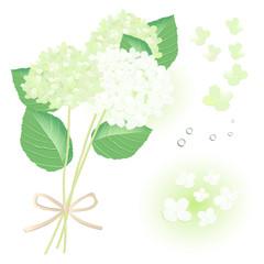 白とライムグリーンのアジサイ