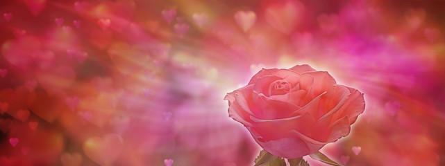 Soft focus Valentine Red Rose Banner