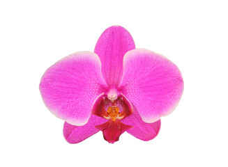 Beautiful flower Orchid, pink phalaenopsis close-up isolated on
