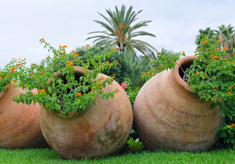 Old jugs like a flower pots