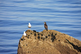 seagulls and cormorant