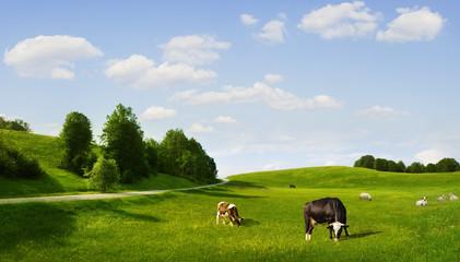 eco pasture