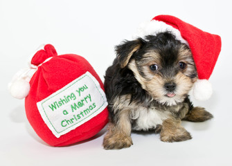 Silly Christmas Puppy