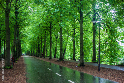 Alley with trees in Muenster, Germany
