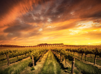 Morning Vines