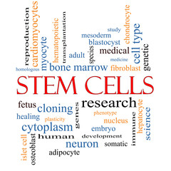 Stem Cells Word Cloud Concept