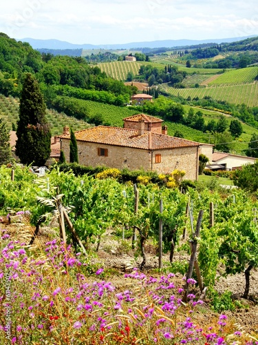 View through vineyards with stone house, Tuscany, Italy - 61143507