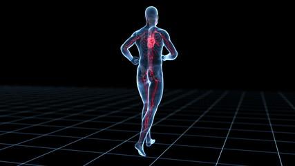 jogging guy - blood vessels