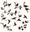 Birds and twigs - 61149167