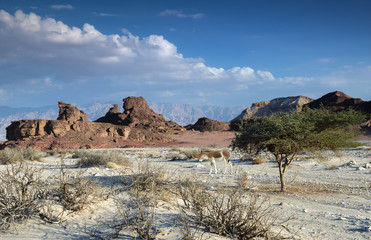 Nature reserve of Timna Park is located 25 km north of Eilat