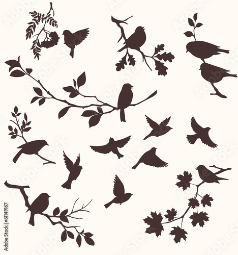ptaki-i-galazki