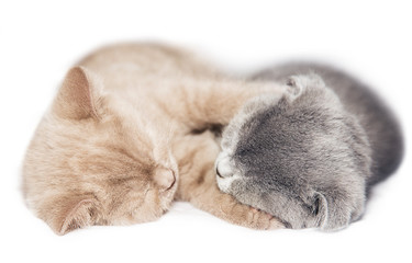two kittens hugging sleep