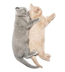 two kittens hugging sleep