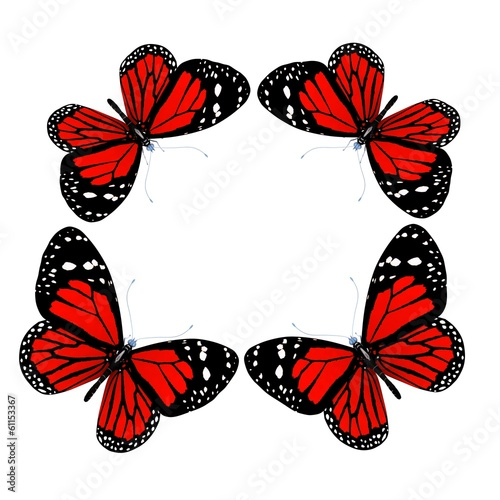 butterflies isolated on white background
