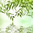 canvas print picture - Natur im erwachen