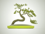Bonsai tree rendered