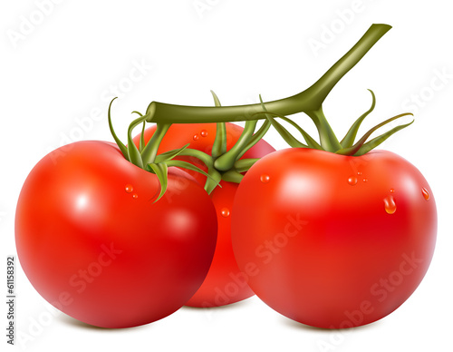Ripe tomatoes branch with water drops