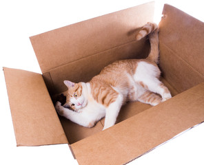 Ginger cat playing in a carton with a toy mouse