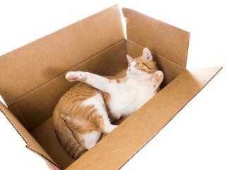 Cat luxuriating in a cardboard box