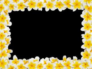 Plumeria Frame black