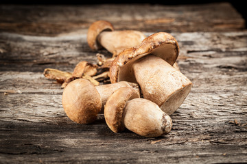 cep on a wooden background. edible mushrooms