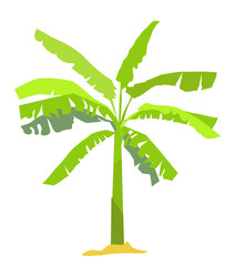 Banana tree - vector