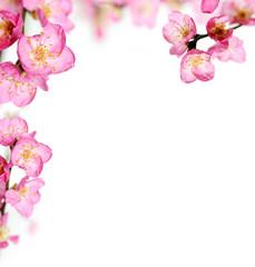 peach flowers frame