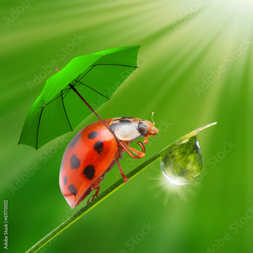 Little ladybug with umbrella. Rainy day in the nature.
