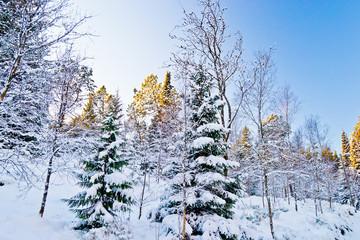 Paisajes nevados - Snowy landscapes