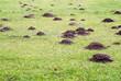 Leinwandbild Motiv Mole mound