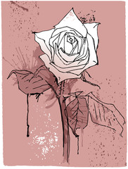 Hand drawing vintage rose.