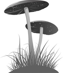 Two mushrooms grayscale