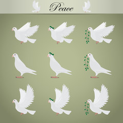 White Pigeons Set - Isolated On Gray Background