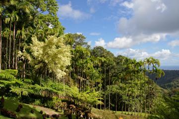 Palmiers royaux du Jardin Balata