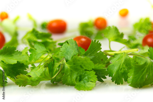Cilantro and Tomatoes