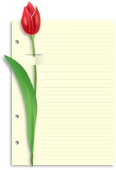One red tulip on sliced lined paper feint