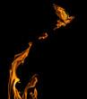 Leinwandbild Motiv flame dove flying from orange flire isolated on black