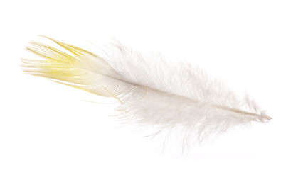 straight feather with yellow edge isolated on white