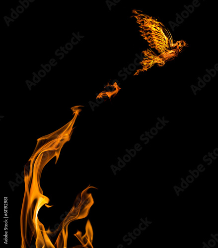 flame dove flying from orange flire isolated on black
