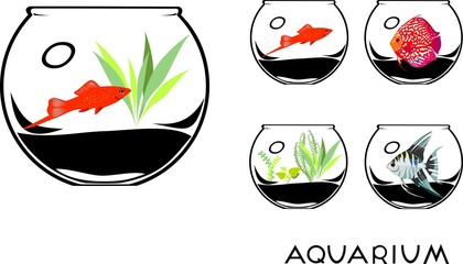 Set of fishbowl with aquarium fishes